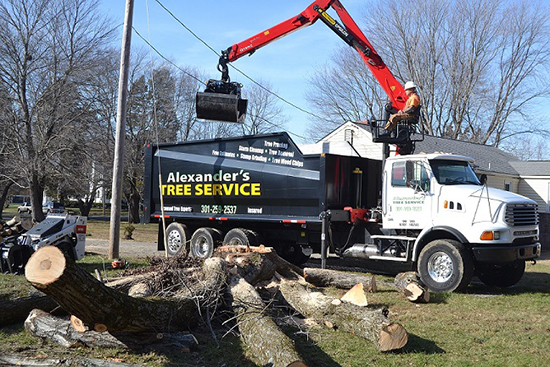 St Marys Tree Service
