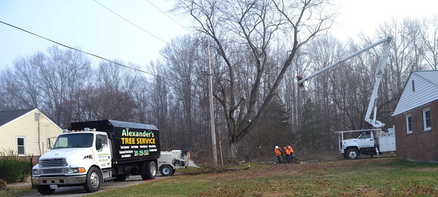 Tree Removal St Marys